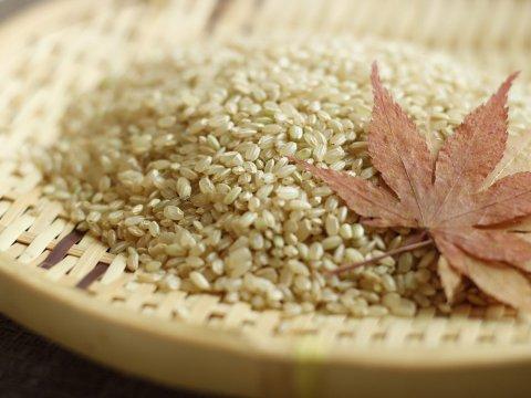 自然栽培米コシヒカリ(玄米) - ゆずりは会 菜の花